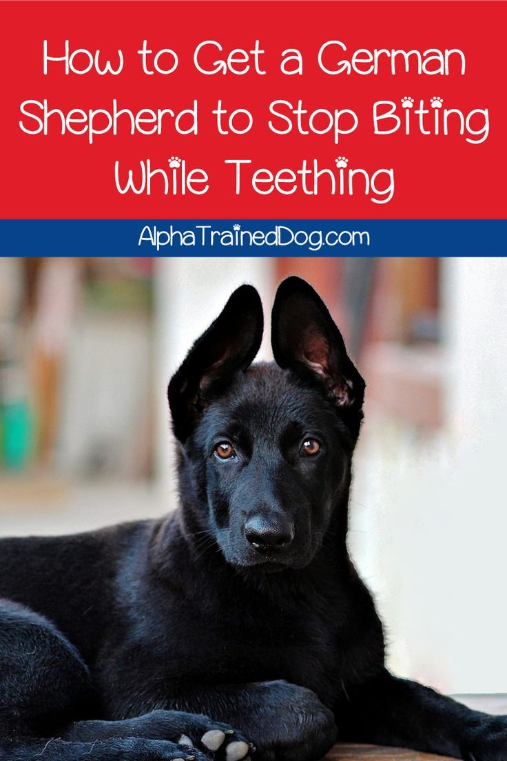 How do you get a German Shepherd to stop biting while