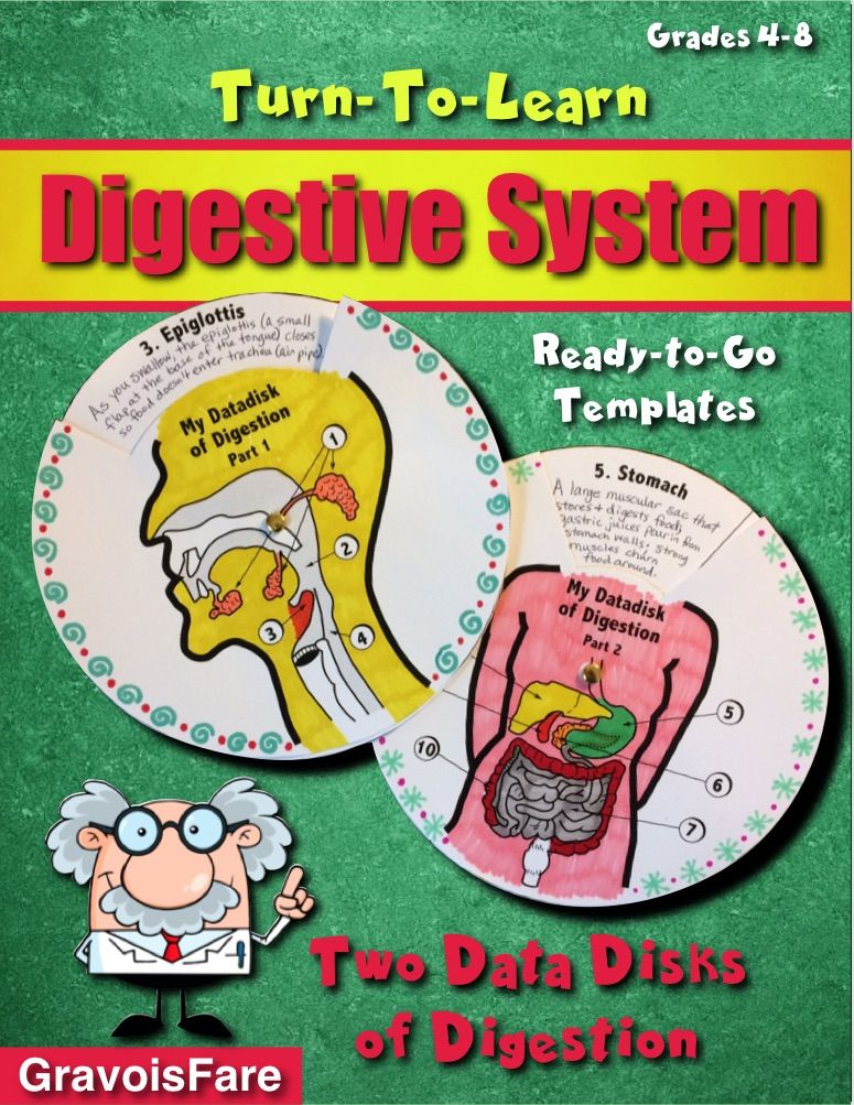 Which Of The Following Is An Accessory Organ Of Digestion Digestive System  Two Data Disks Of Digestion  A Handson