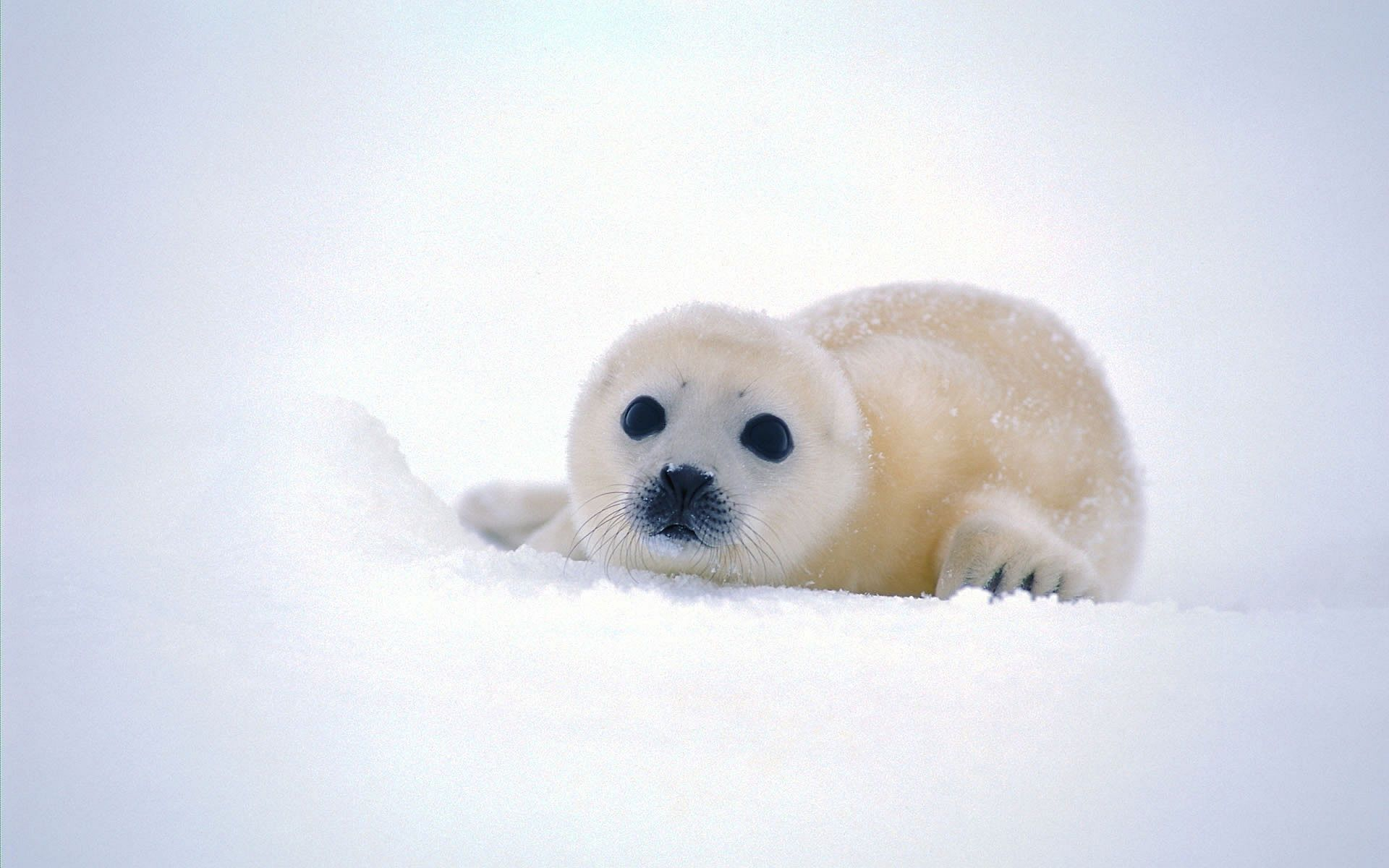Baby Seal Baby Animals Baby Sea Lion Cute Animals