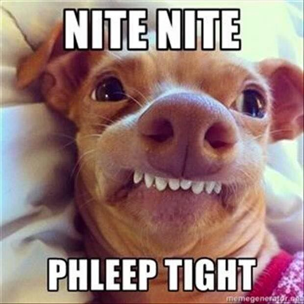 Chihuahua With An Overbite Hilarious Posted On Facebook By Southern Pinning