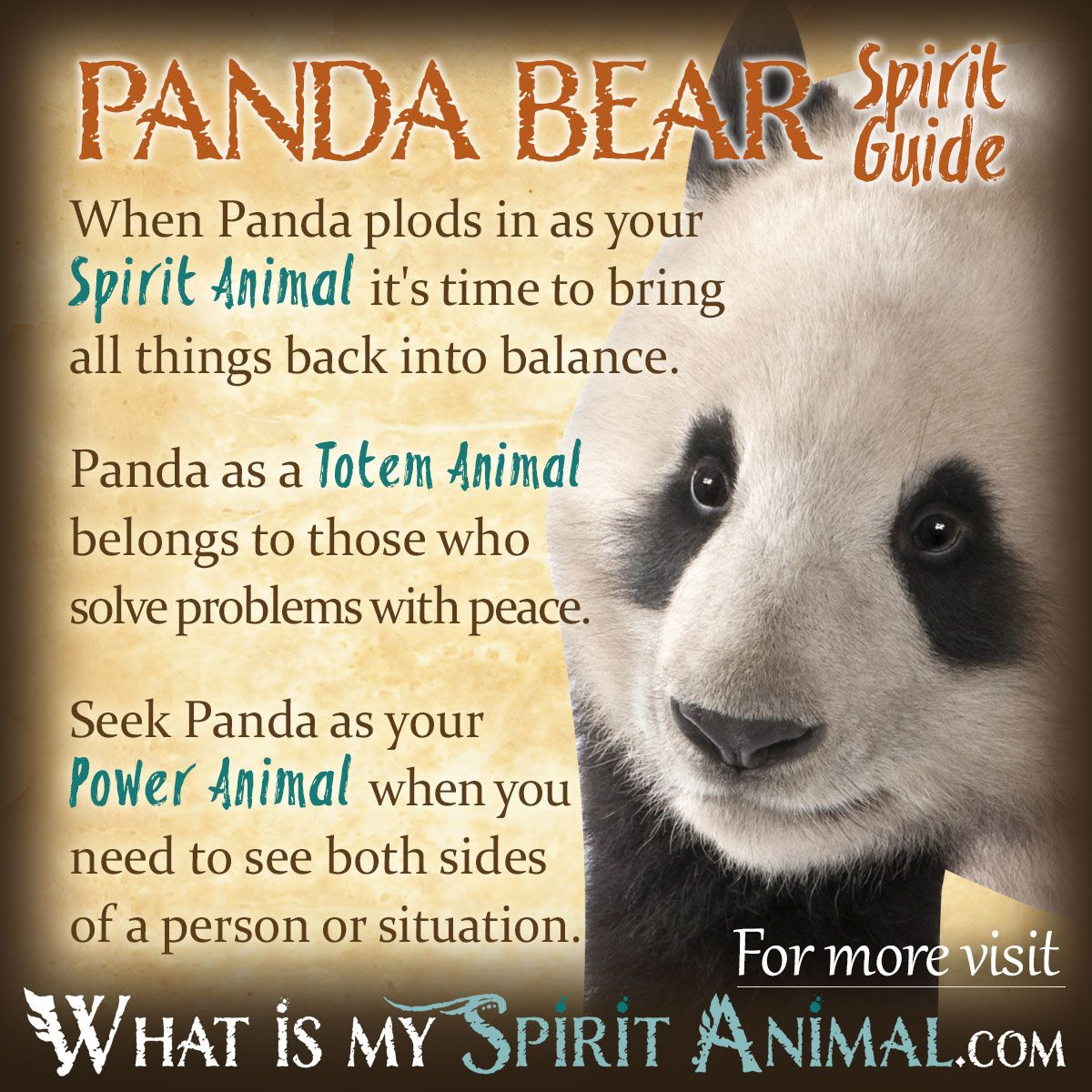 Panda bear symbolism meaning power animal totems and panda panda bear spirit totem power animal symbolism and meaning 1200x1200 biocorpaavc