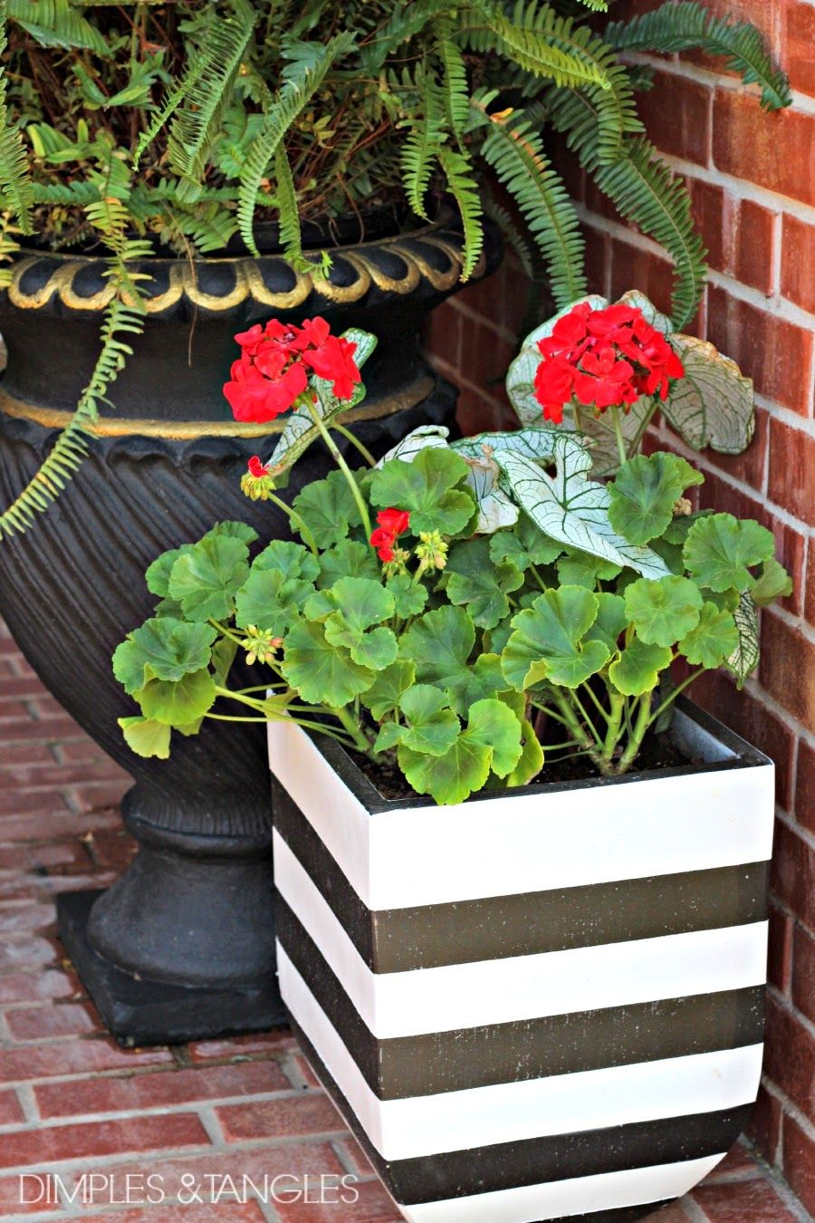 Diy Black And White Striped Pots White Planters White Plants