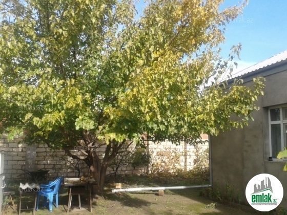 Satilir 3 Otaqli 95 M2 Bag Evi Sumqayit Xəzər Baglari Unvaninda Outdoor Decor Plants Outdoor