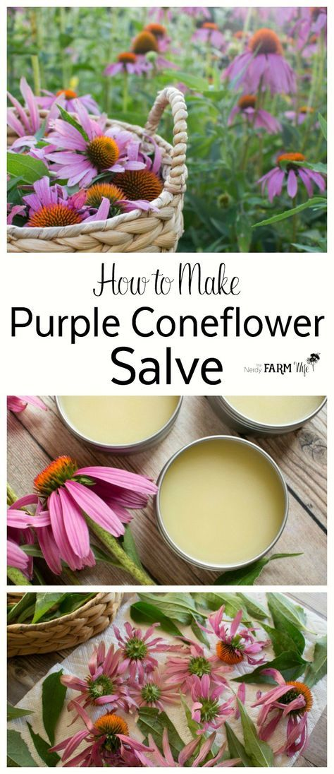 How To Make Echinacea Purple Coneflower Oil Salve Natural Healing Remedies Diy Natural Products Echinacea
