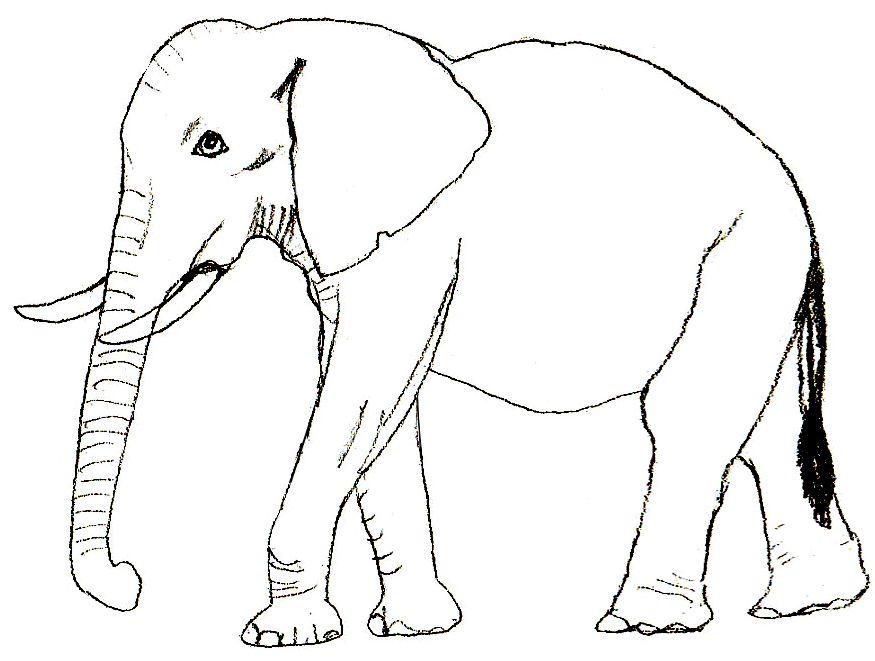 18 Schoene Ausmalbilder Elefant Dekoking Com Ausmalbilder