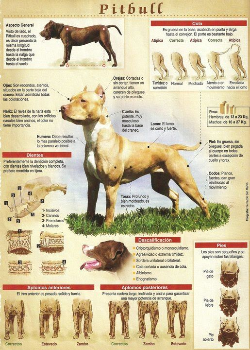 Pin On Dogs Terriers