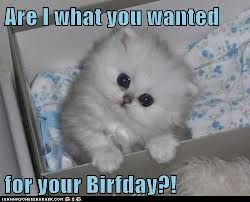 Are i what you wanted for your birfday?