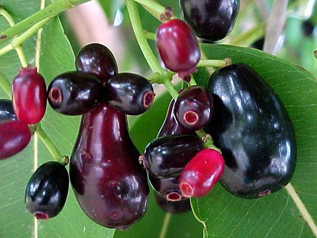10 Delicious Fruits To Have In Bali Organic Fruits And Vegetables Fruit Fruit Plants
