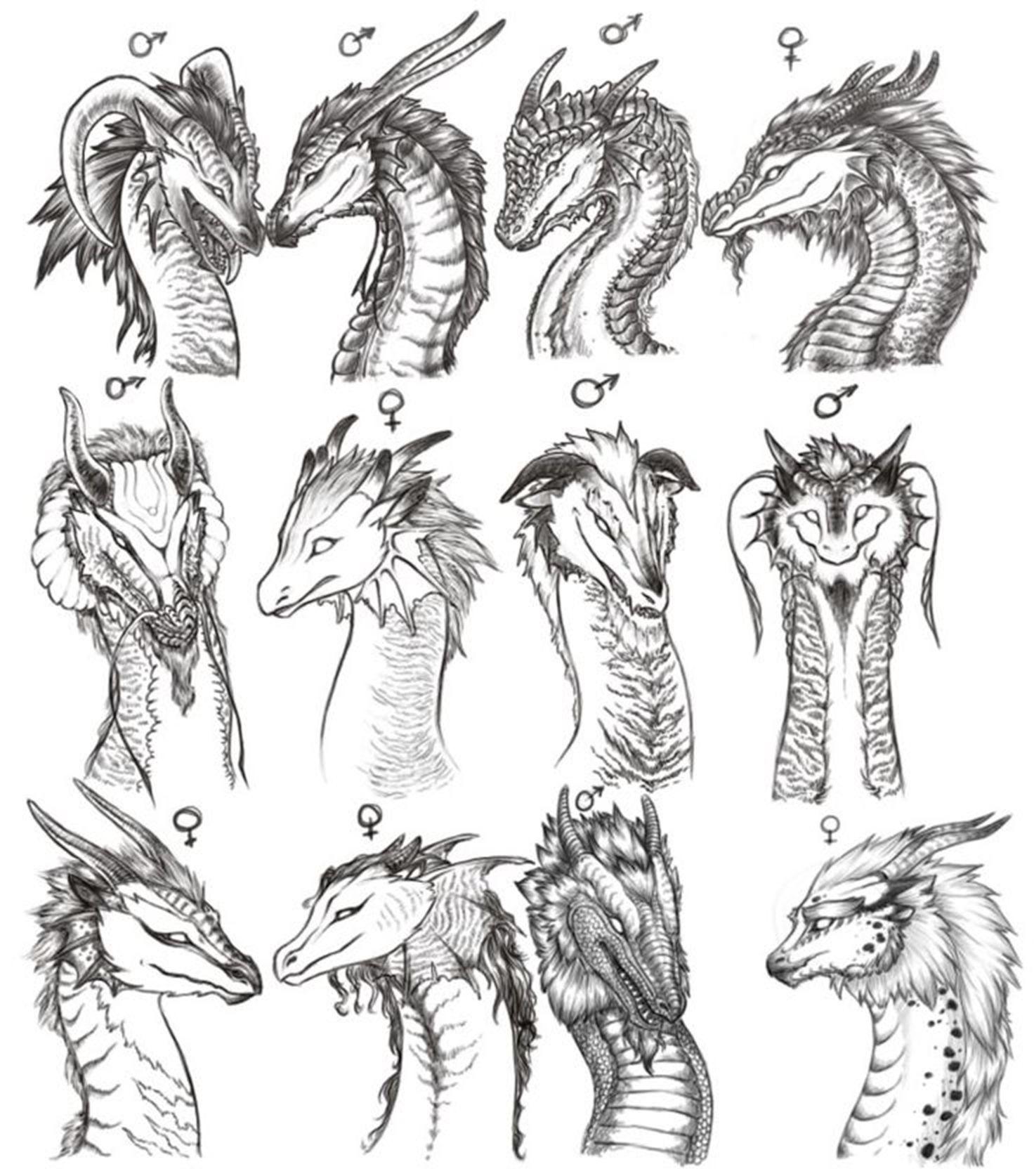 Картинки драконов анатомия