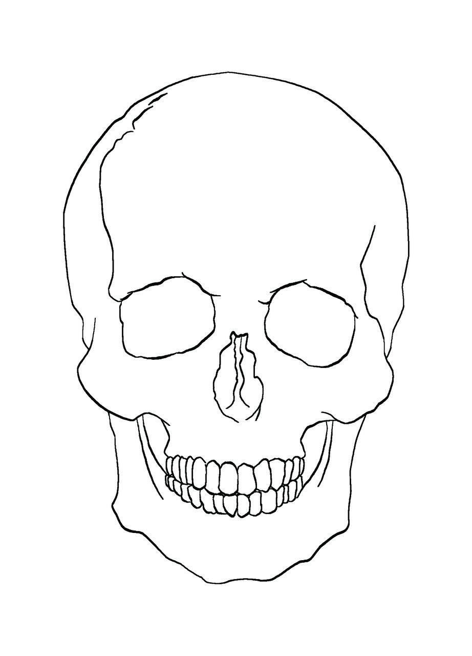 line drawings of skulls