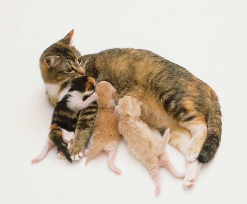 How you can help a mother cat during birth cat birth