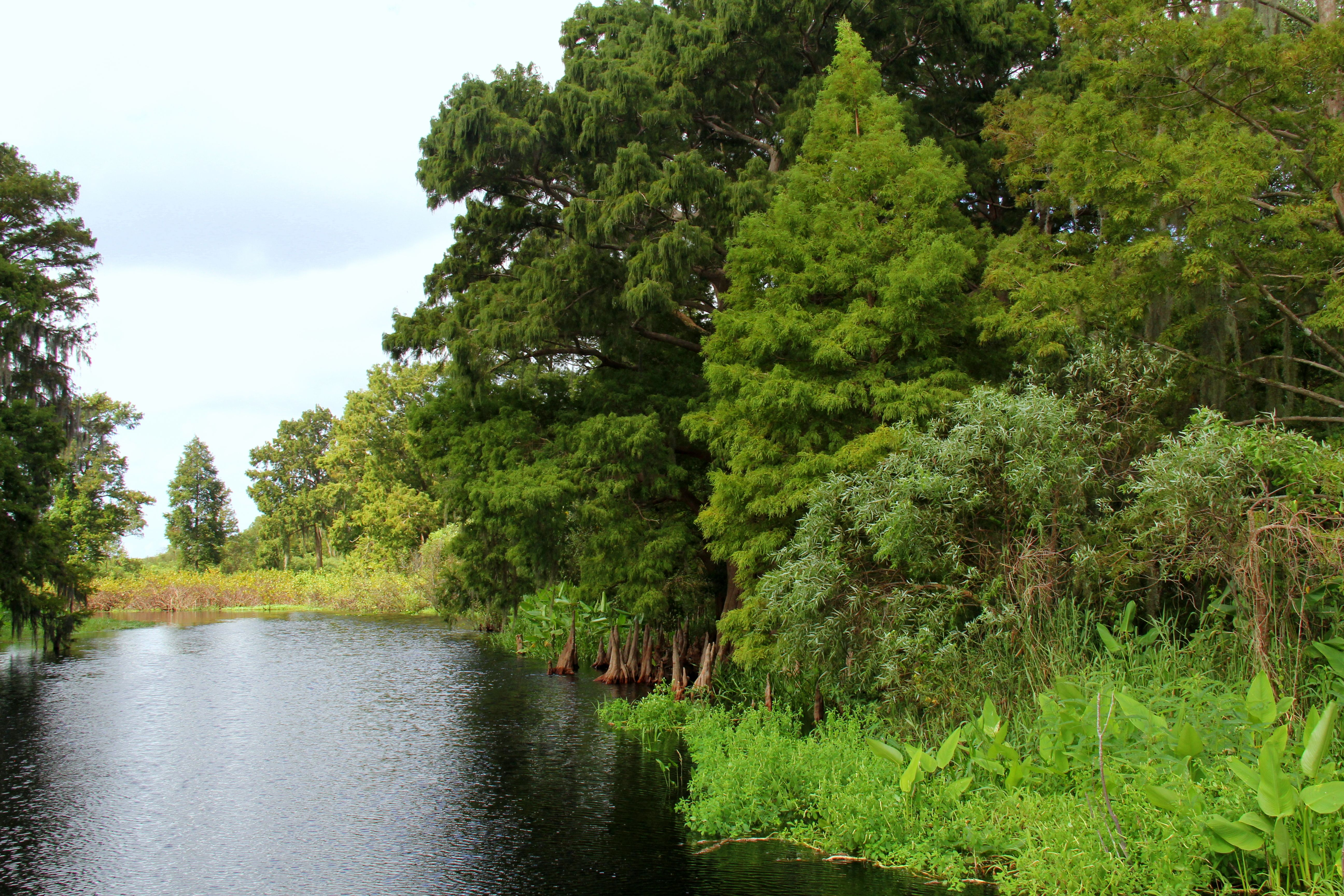 Orlando Airboat rides! We have the best scenery ever