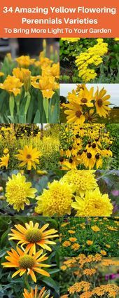 Want a dash of life and sunshine in your garden These yellow perennials will de Want a dash of life and sunshine in your garden These yellow perennials will de