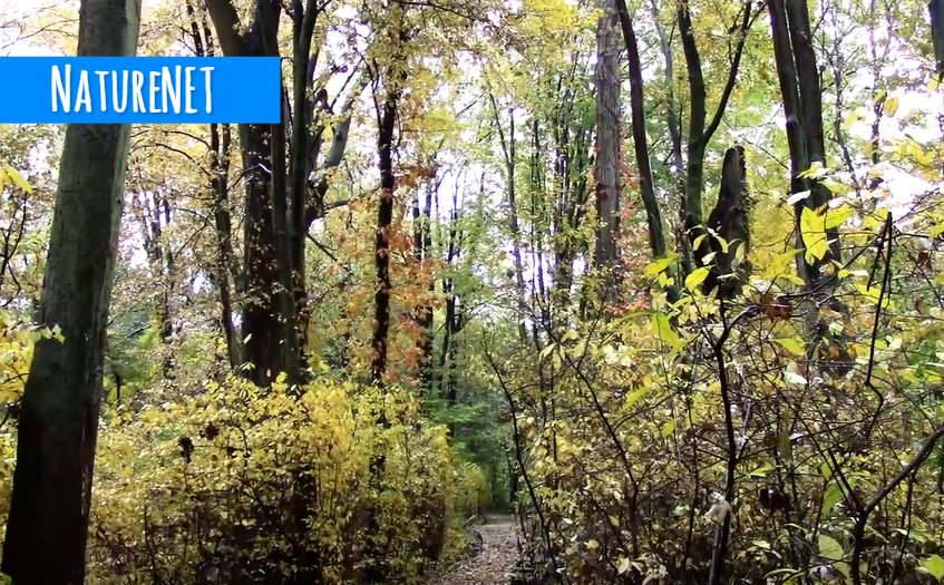 Trail Rain Relaxing Nature Video Sleep Chill Study National Parks Nature Gif Scenic