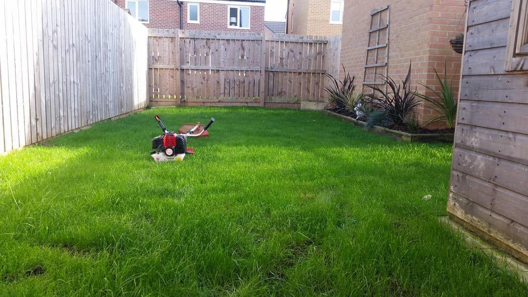 Loads Of Heavy Rain Lately Everything Is Still Damp Stuartslawncareuk Stuartslawncare Ilovegardening Mowing Services Garden Lovers Gardening Trends