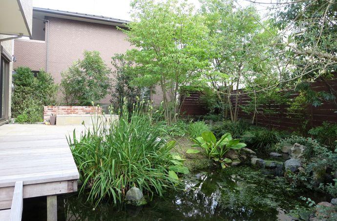 立派なビオトープの水景があるお庭。 植物も多種多様で、昆虫や野鳥も多く生息する、とても個性的で魅力ある空間でした。 ただその分、植物手入れが・・・