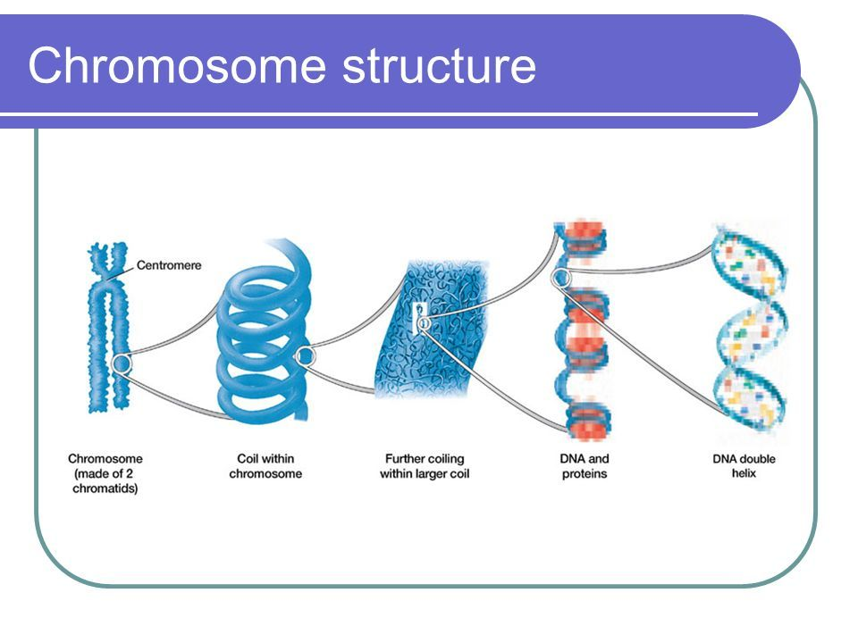 dna chromosome Find information, videos, and activities about dna, genes, chromosomes, the building blocks of inheritance.