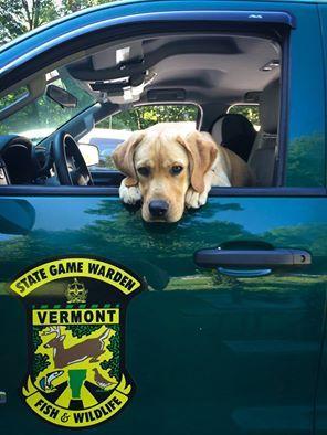 K9 Ramsey - Vermont Fish & Wildlife  Vermont State Game