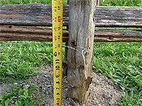 À quelle hauteur installer les perches d\'une clôture de jardin ...