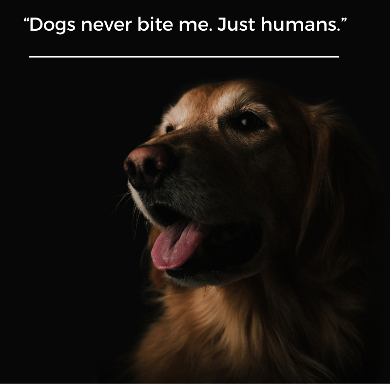 Pin on Animal Quotes
