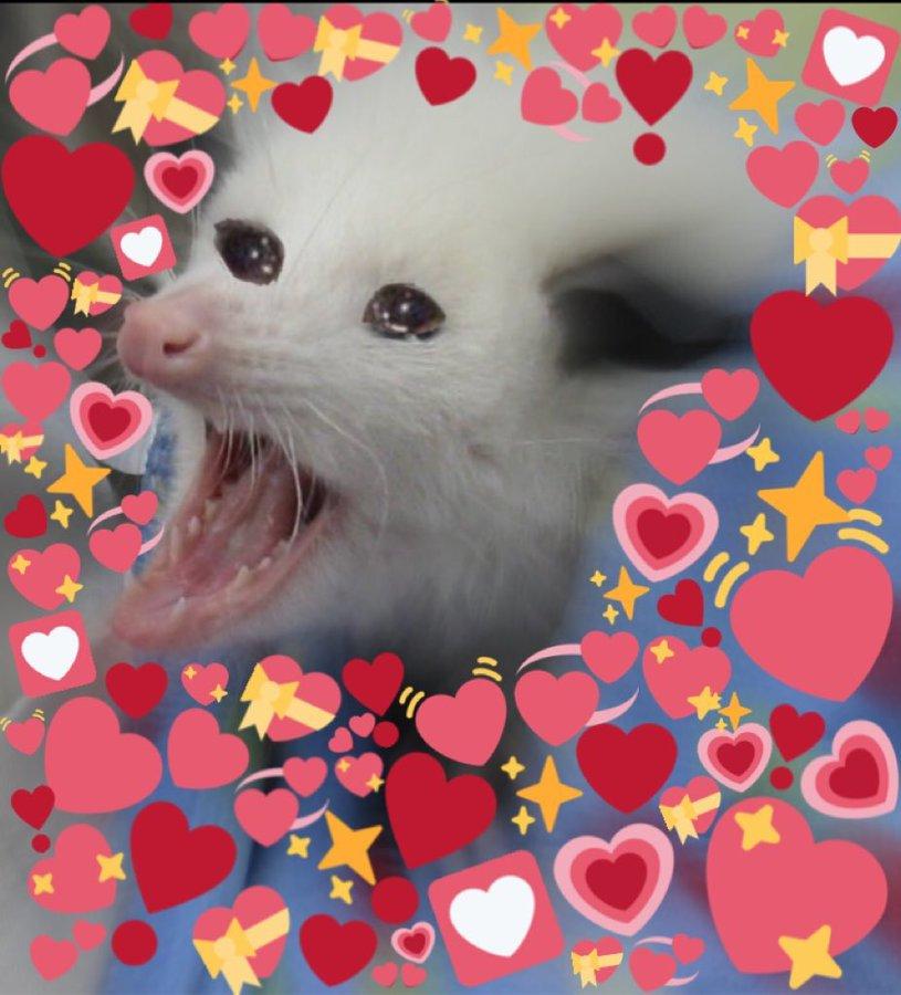 possum in 2020 | Heart emoji, Memes, Emoji