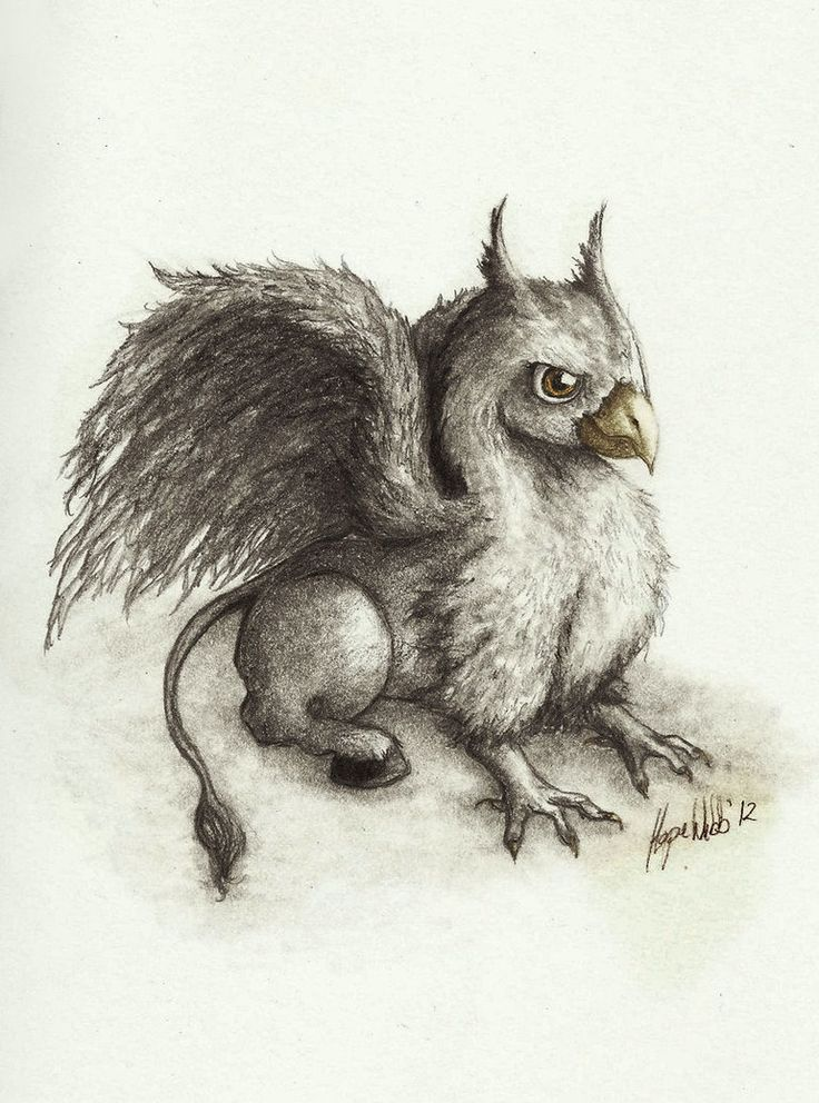 Baby Hippogriff Google Search Caleb S Page In 2019