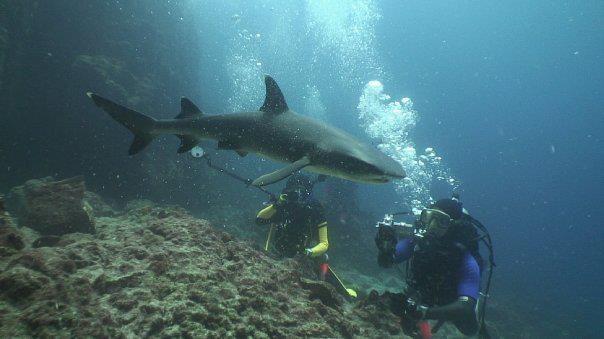 Hasil gambar untuk GILI TEPEKONG ( SHARK POINT ) snorkeling