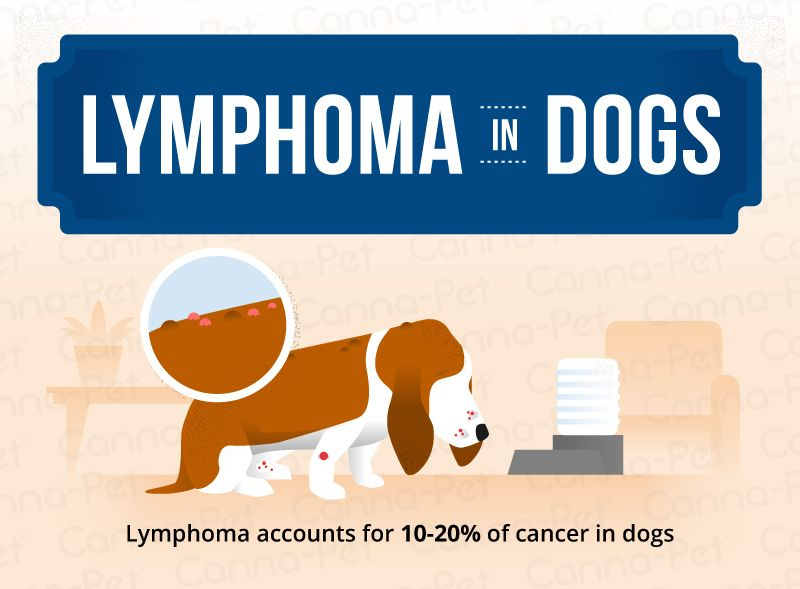 Lymphoma In Dogs Lymphoma In Dogs Dogs Pets