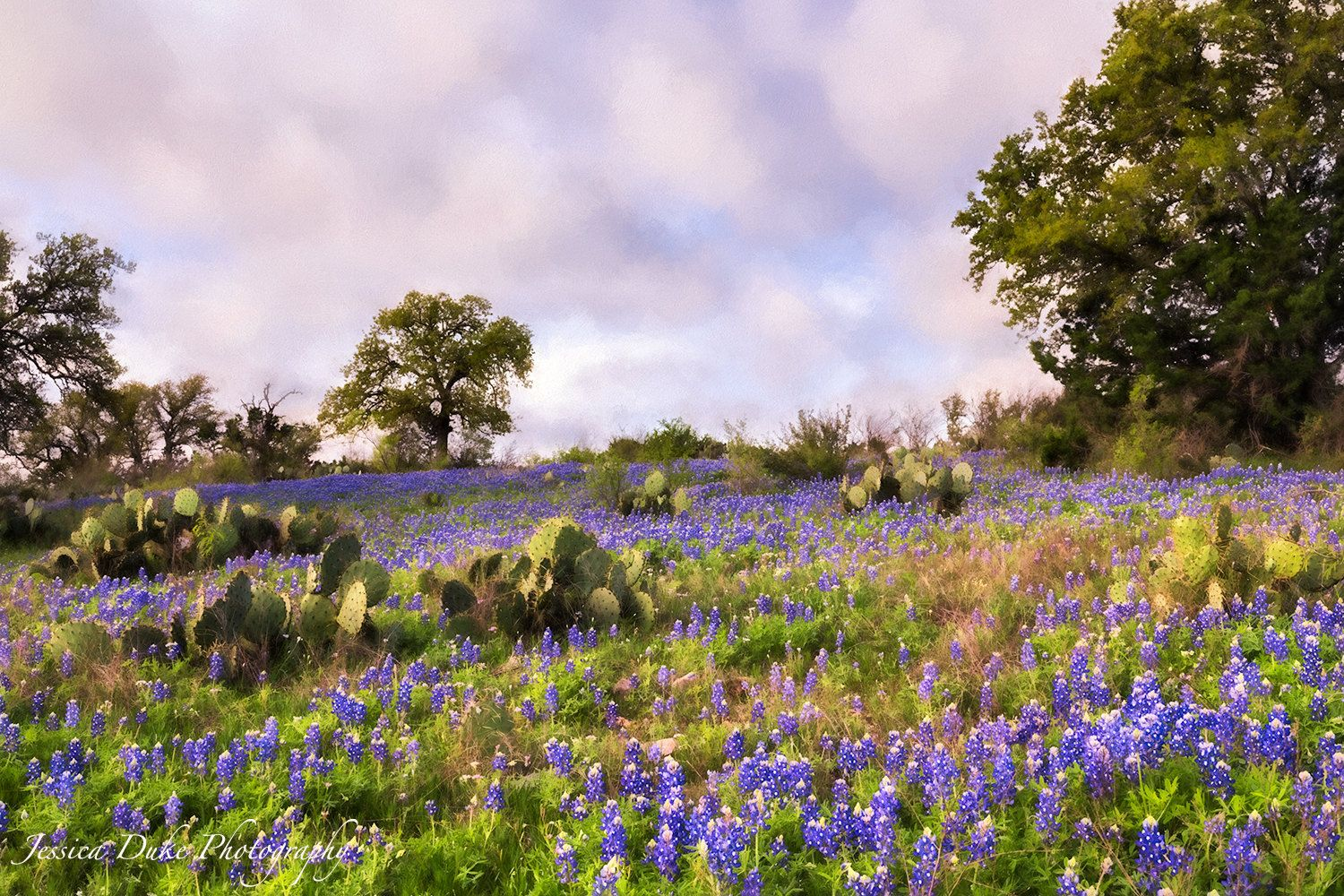 Texas Bluebonnets, Landscape Photography, Flower Photography, Texas Landscape Photography, Fine Art Photography, Nature Photography, Blue by JessDukePhotography on Etsy