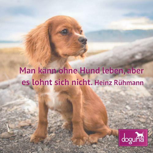 Man Kann Ohne Hund Leben Aber Es Lohnt Sich Nicht Heinz Ruehmann