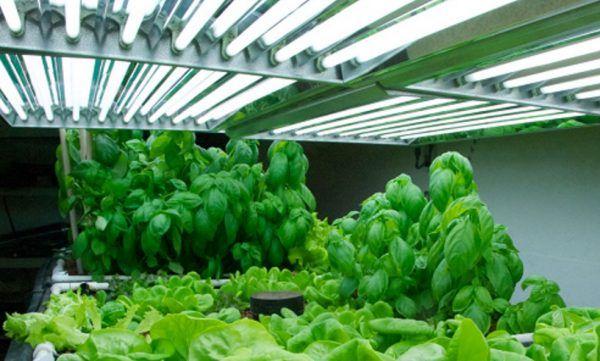 Growing Indoor Plants With Fluorescent Lighting 400 x 300