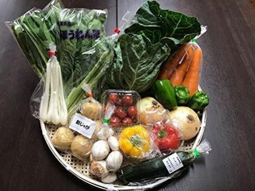 千葉茨城県 農家さん直送野菜 新鮮採れたて 10品目
