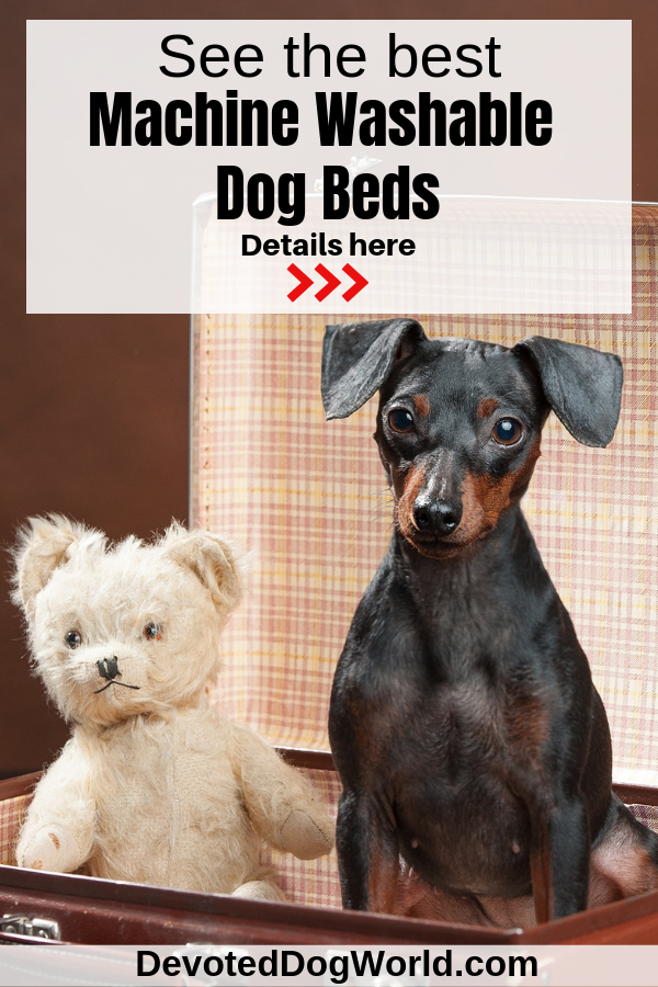 Top 5 Completely Machine Washable Dog Beds (To Save You