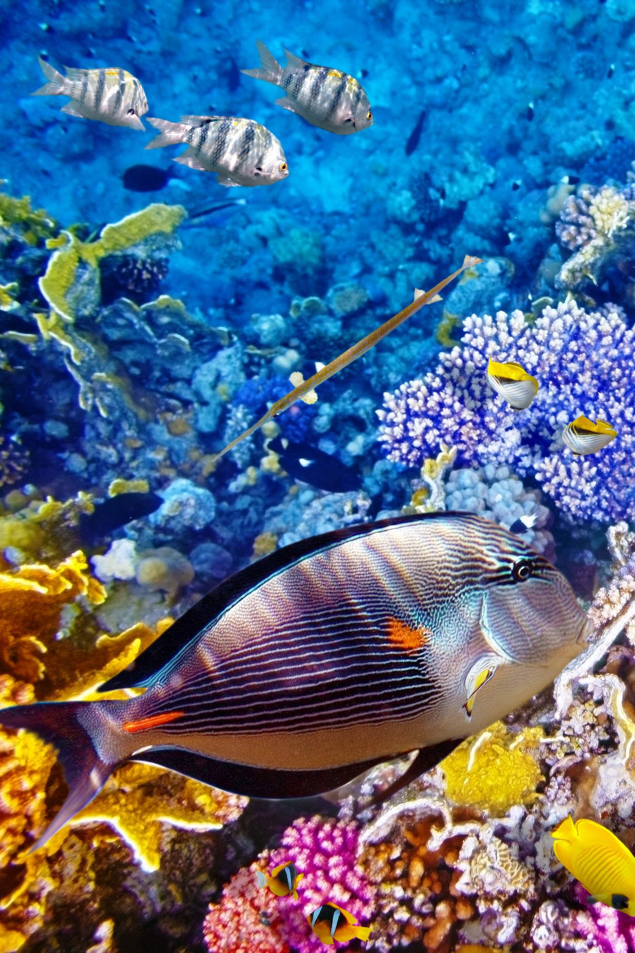 Great Barrier Reef Australia A Natural Wonder Is