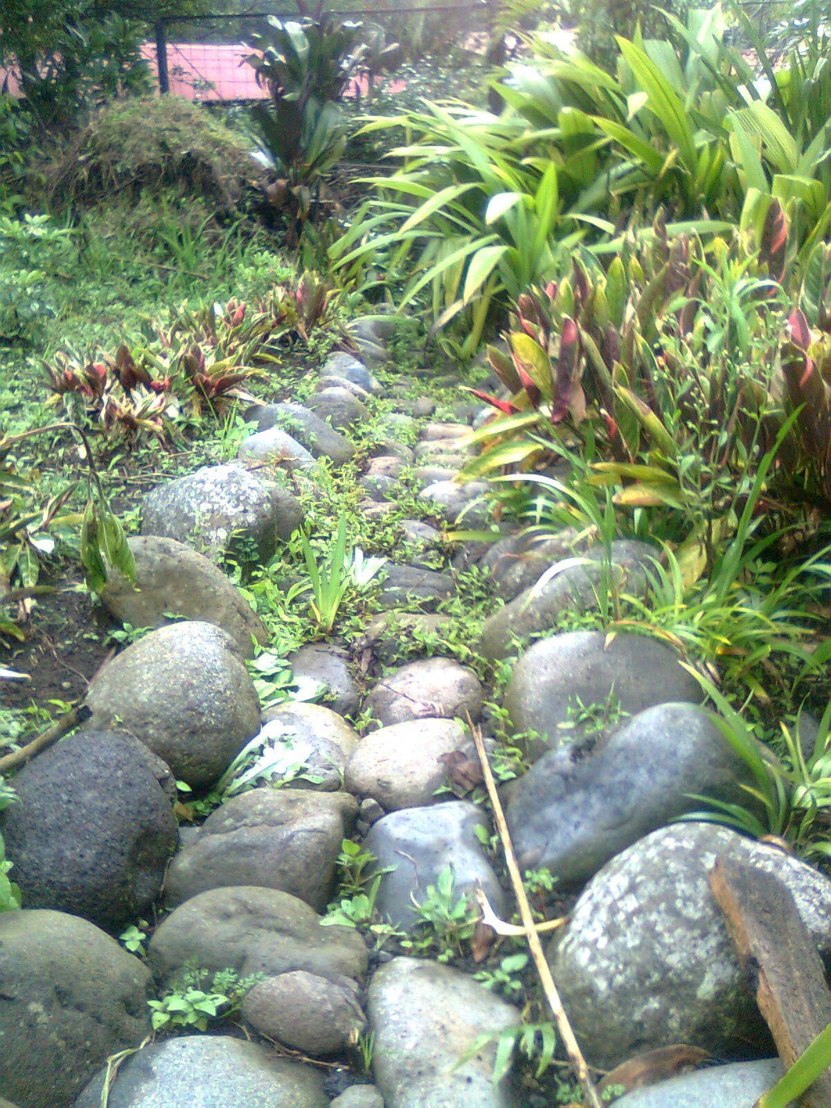 Calzada de piedra para drenaje de jardin el jard n for Como decorar mi jardin con piedras y plantas