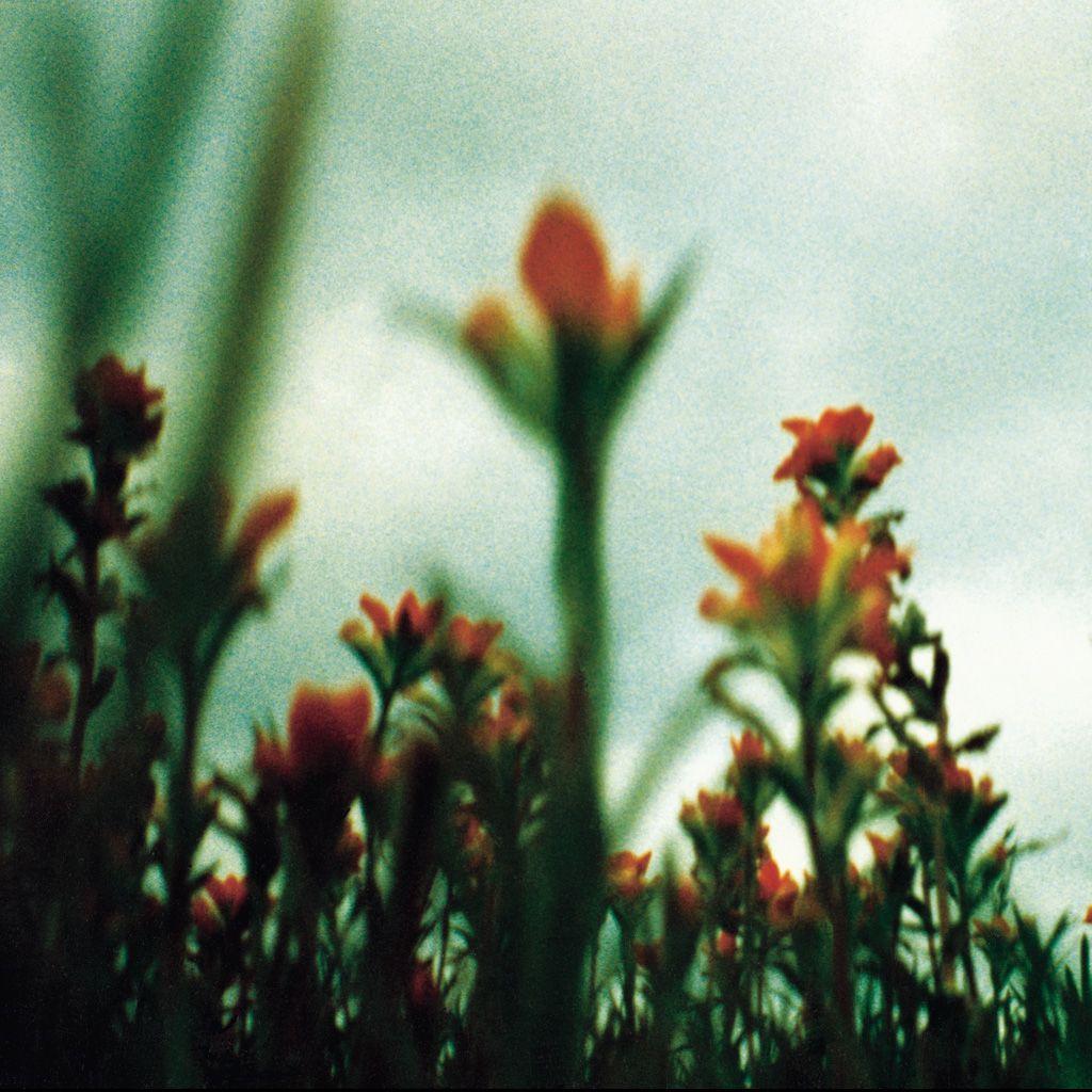 Nine Inch Nails — The Fragile by David Carson | NIN | Pinterest ...