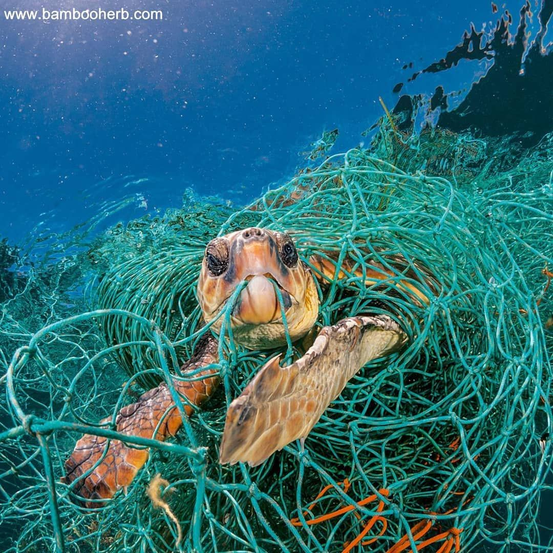 Protect Wildlife Save The Turtles Stop Using Plastic Products That Ends Up In Oceans Switch To Reusable Pr Save Planet Earth Save The Sea Turtles Save Earth