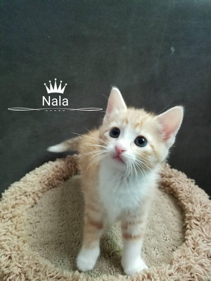 Adopt Nala On Post Animal Pets Tabby Cat