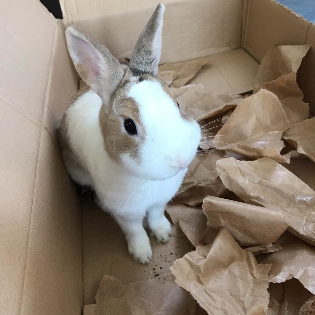 Lapins Instagram Lapin Lapins Rabbit Rabbits Animal Animals Animaux Poils Domestique Domestic Ferme Farm Enfants Children C Lapin Animaux Enfant