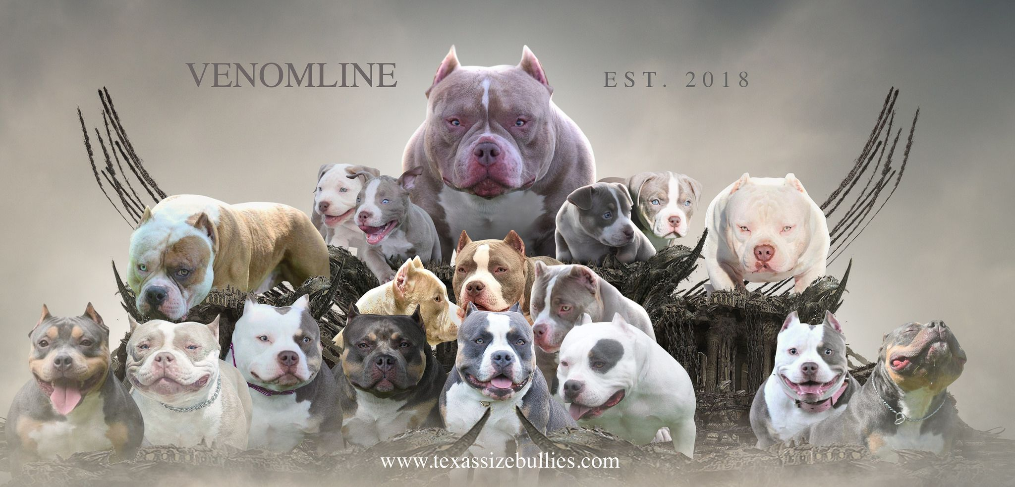 Venomline Produced Pups Adults Pocket Bully American Bully