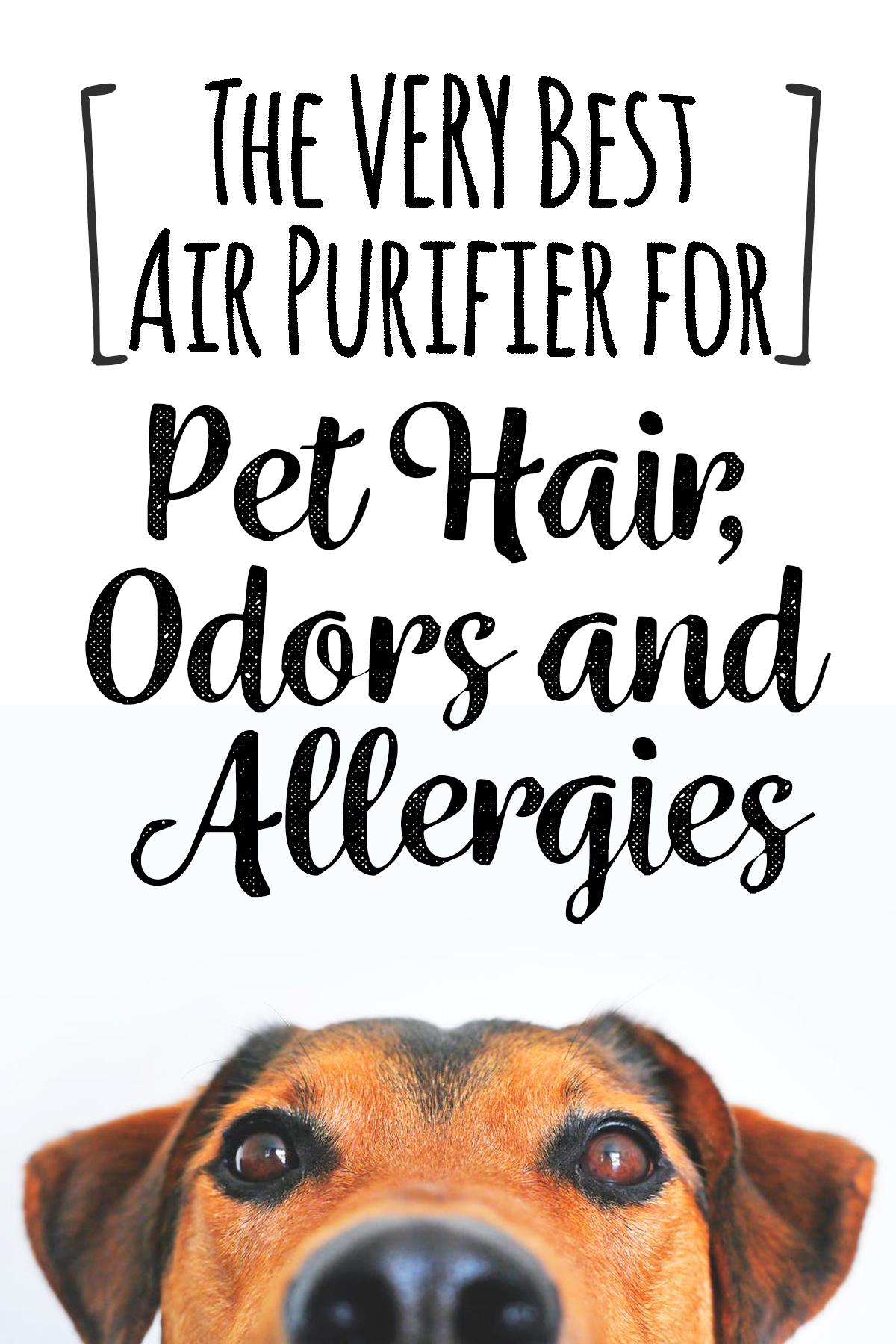 2020 Best Air Purifier For Pet Hair Pet Dander Odors And
