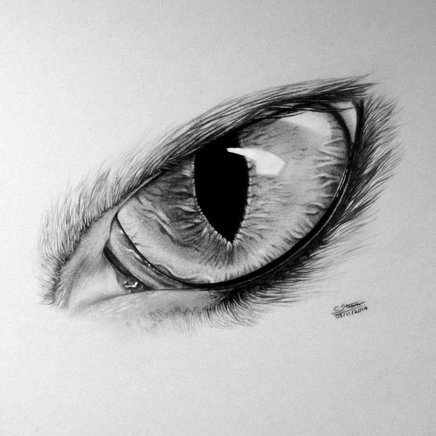 Realistic Cat Eye Drawing by on