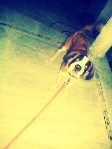 Barking..