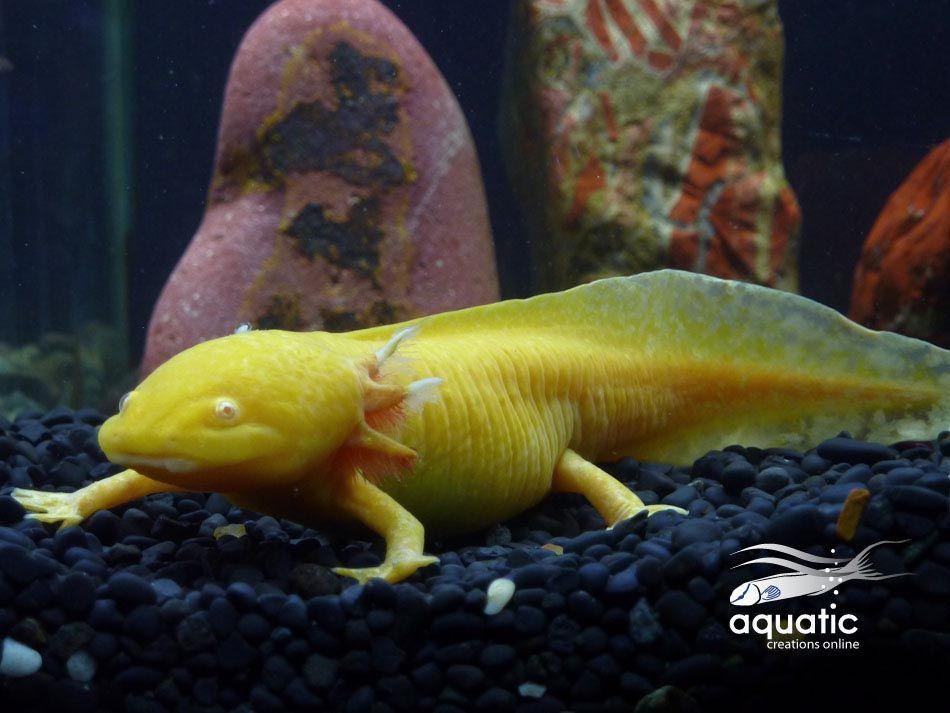 Aquarium Salt for Goldfish – The 3 benefits of using salt ...
