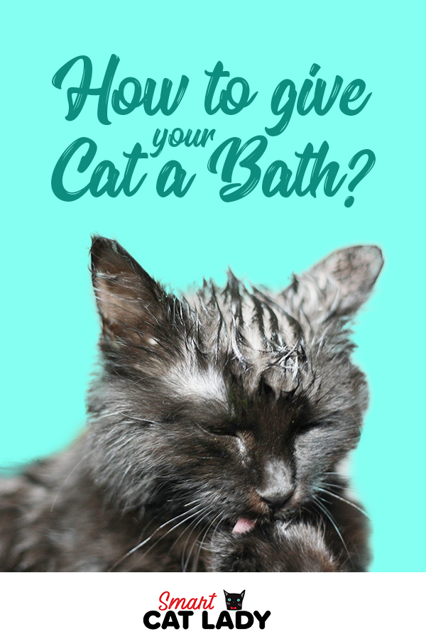 We often ask ourselves if cats really need a bath or is it