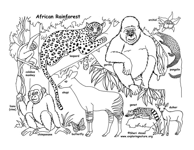 Color And Learn About Habitats On Exploringnature Org Jungle Coloring Pages Animal Coloring Pages Animal Coloring Books