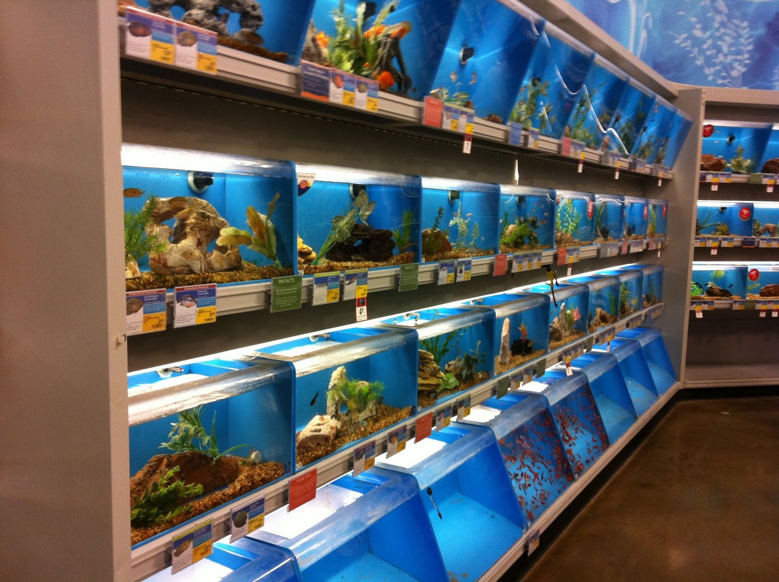 Petsmart thinglink for Smart fish tank