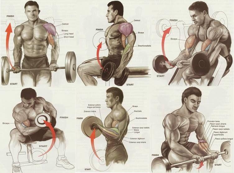 Biceps workout chart | bodybuilding | Pinterest | Biceps ...