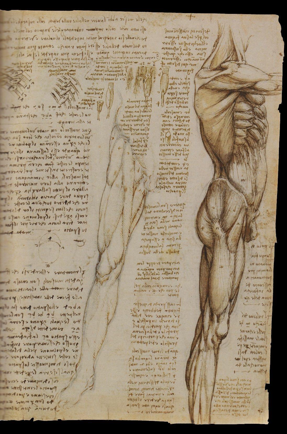 Leonardo Anatomy Pinterest Anatomy Anatomy Reference And