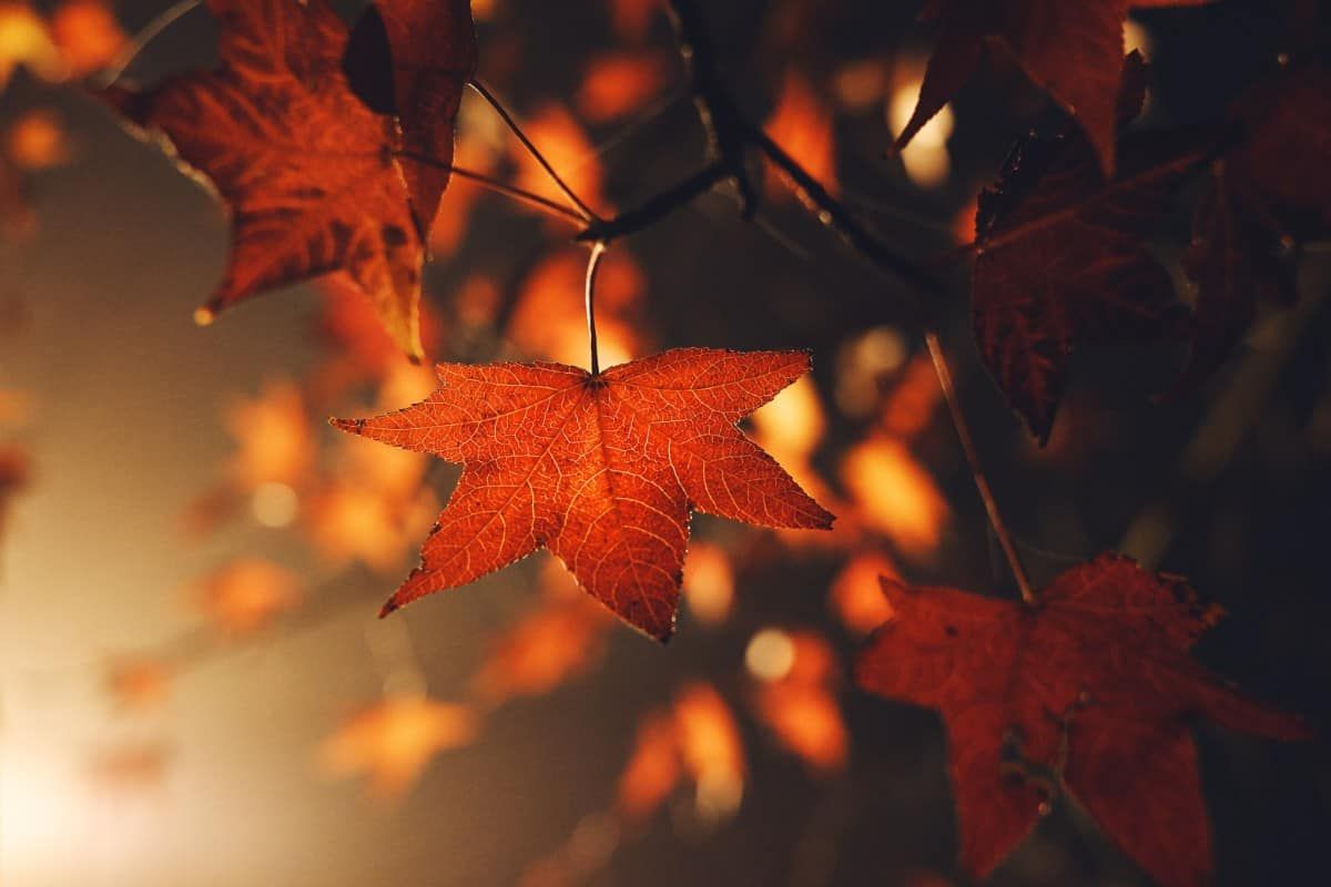 60 Of The Best Macro Wallpapers To Get Up Close And Personal Fall Wallpaper Cute Fall Wallpaper Fall Desktop Backgrounds